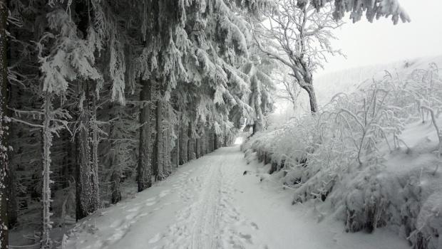 Langlaufloipe von Hammerunterwiesenthal nach Oberwiesenthal